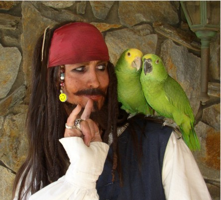 http://www.parrots4parties.com/images/jack-mug-3-sm.jpg