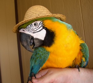 bird shows and bird show entertainment with performing parrots