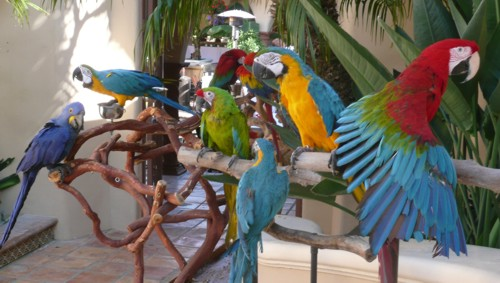 parrots for Jimmy Buffett party or parrot head party