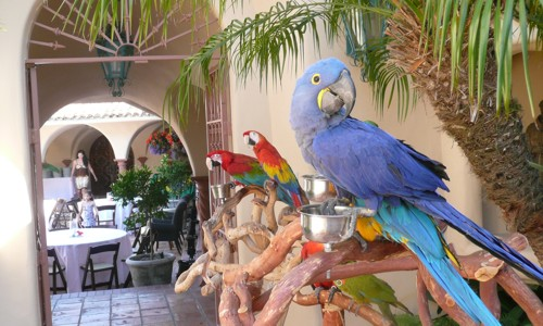 parrots for Jimmy Buffett party