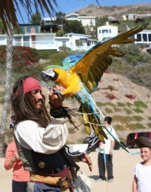 parrot shows on the beach